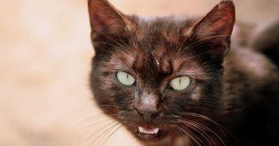 Diese arme Katze ist seit über 20 Jahren im Tierheim!