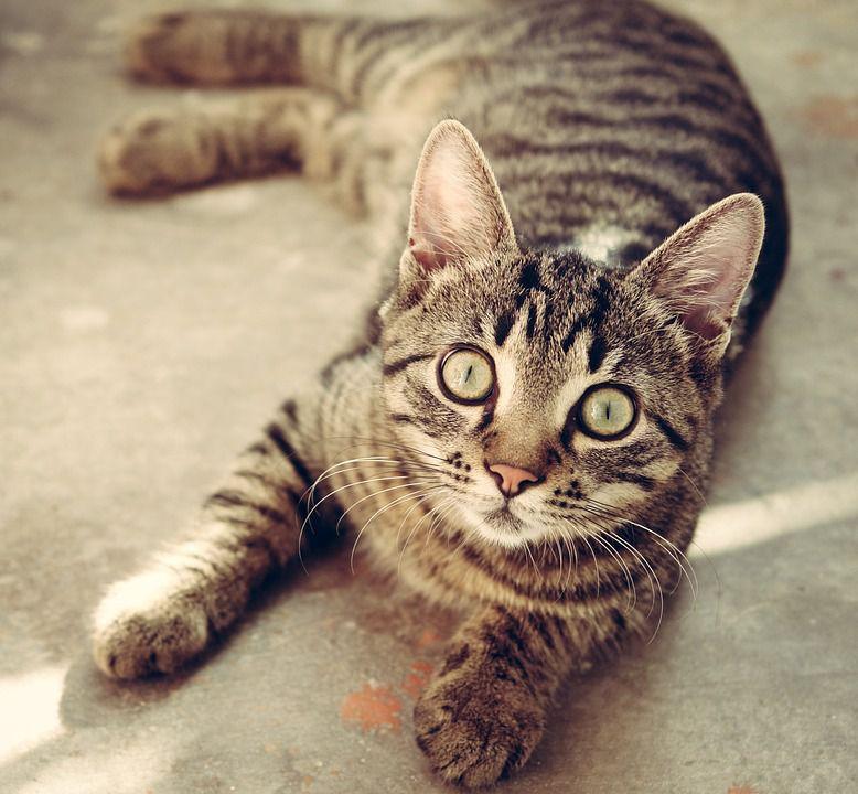 Achtung: So darf man Katzen nicht hochheben