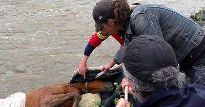 Du wirst nicht glauben, wie diese Frau einem Pferd das Leben rettet