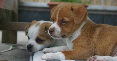 Aufgepasst: Diese Hunde haaren nur wenig