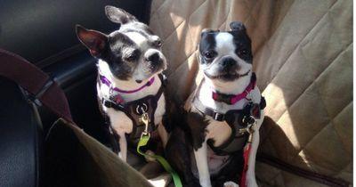 So krass reagieren Hunde, die zum Tierarzt müssen
