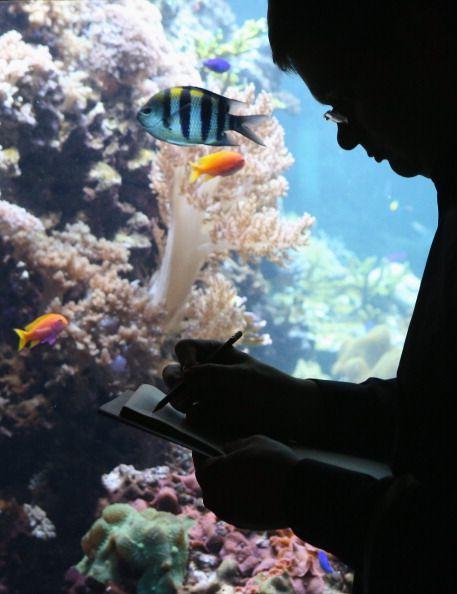 #freeinky: Die geniale Flucht eines Oktopusses.