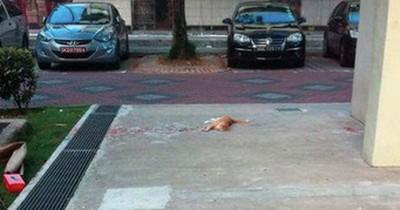 Ein Mann will diese Katze retten. Doch als er näher kommt, kann er seinen Augen nicht trauen