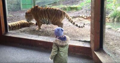 Deshalb solltest du niemals einen schlafenden Tiger wecken
