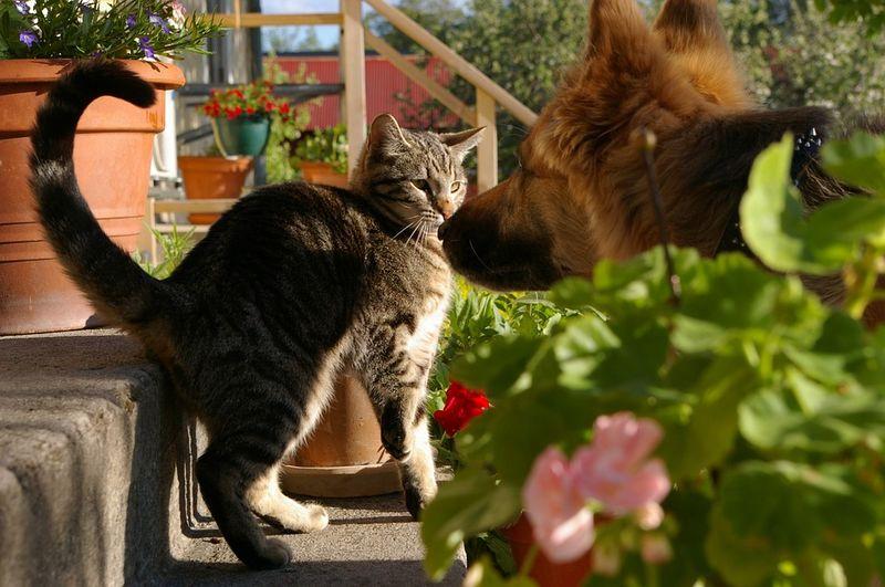 Diese Hunde jagen die Katze - und die überrascht alle!