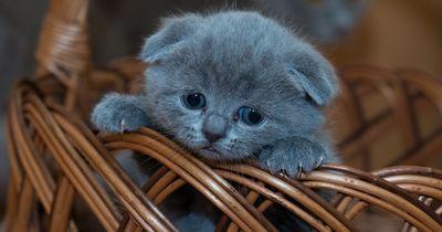 Dieses Katzenbaby steht vor einem Rätsel
