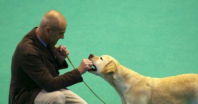 Hundebesitzer staunt über seine Labradorhündin