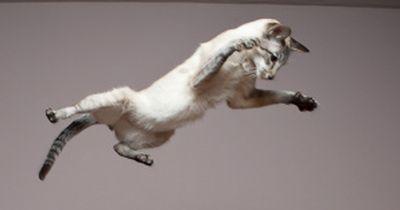 Wie tief kann eine Katze fallen?  Dann wird es lebensbedrohlich!