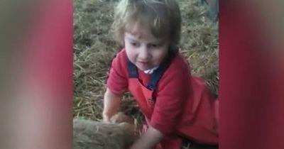 Dieses kleine Mädchen bringt mit ihren eigenen Händen ein Lamm zur Welt!