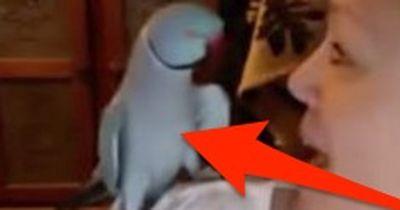 Was DIESER Papagei kann, bringt über 3 Mio. sofort zum Lachen!
