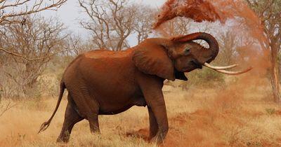 Elefantin wurde 53 Jahre lang misshandelt