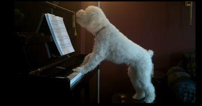 Was dieser Hund tut, während er allein zu Hause ist, glaubt echt keiner!