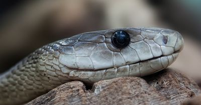 6 erstaunliche Fakten über Schlangen