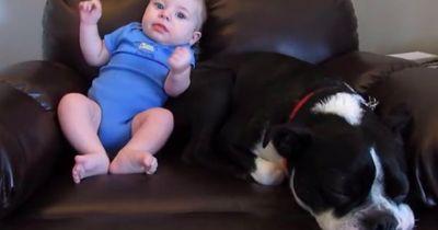 Unfassbar, was dieser Hund neben dem Baby macht