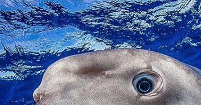KRASSE Kreatur aus dem Meer!