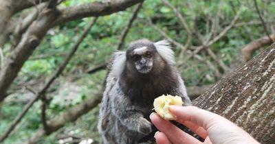 Einmal die Affen ganz aus der Nähe betrachten  ...
