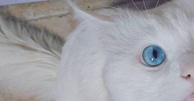 Iris-Heterochromie
