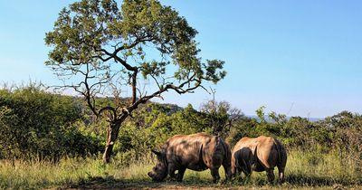 Diese Tiere könnten 2016 aussterben