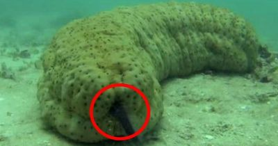 """Der Pearlfish lebt an diesem """"besonderen"""" Ort"""