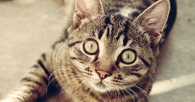 Katzenunglück: Passanten greifen schnell ein!