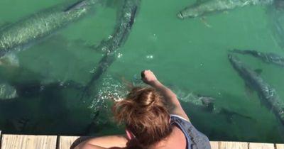 Diese Frau wollte bloß Fische füttern, doch dann geschah etwas Unheimliches