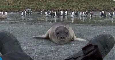 Hilfe - eine Robbe ist im Anmarsch!