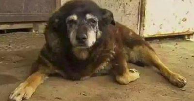 Maggie, der bisher älteste Hund der Welt!