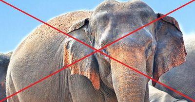 Die letzten Elefanten in Nigeria sind in Gefahr