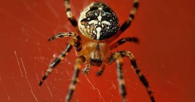 Diese beiden Spinnen wurden beim Oralverkehr erwischt!