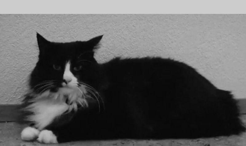 So muss es sich anfühlen, eine Katze zu sein