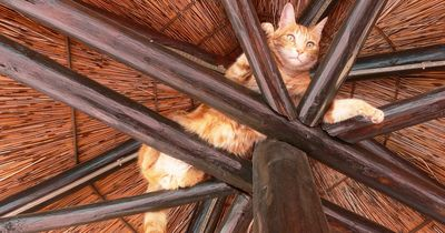 DARUM sind Katzen solche Spinner!