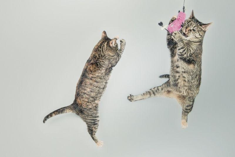 Backe Backe Kuchen Katzen Zuhause Image Ideas