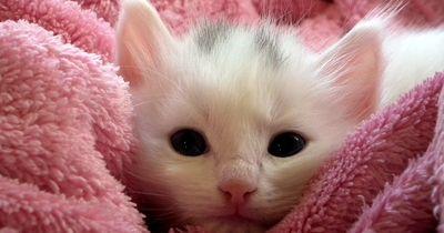 Diese 13 Kätzchen sind zuckersüß!