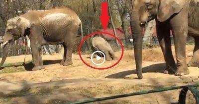 Lustiges Video: Elefanten treiben Sport