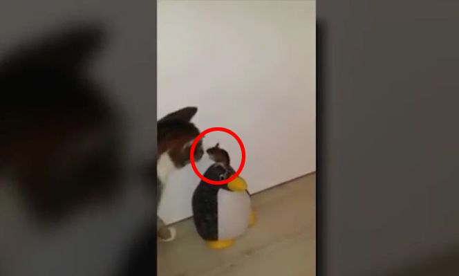 MIAU! DAS sind die besten Katzenvideos des Jahres!