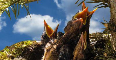 WICHTIG! So verhältst du dich, wenn du ein Vogelbaby findest!