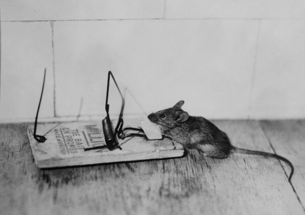 Eine Maus Auf Humane Weise Fangen So Geht S