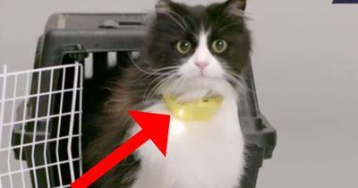 Dieses Halsband wird verändern, wie du mit deiner Katze umgehst!