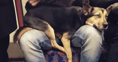 Diese Hunde fahren Bahn