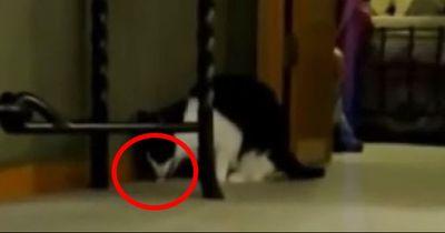 Diese Katzen kotzen zu Techno