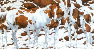 Wie viele Pferde siehst du auf diesem Bild?