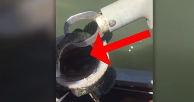 In Australien macht ein Angler einen total verrückten Fang