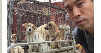Dieser Mann riskiert sein Leben, um Hunde zu retten!