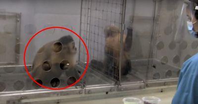 Zwei Affen wurden ungleich behandelt! Ihre Reaktion? Unglaublich!
