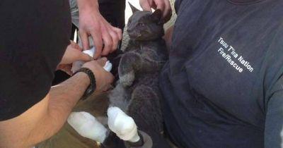 Wie diese Katze einen Waldbrand überlebte, ist unglaublich!