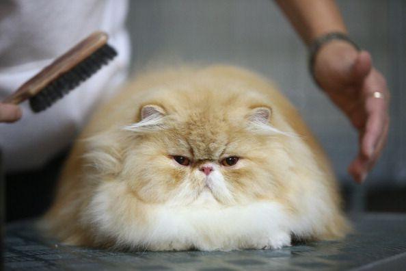 Mit dieser innovativen Bürste kannst du deine Katze ablecken!