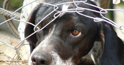 Dieser Mann hat seinen Hund brutal gequält
