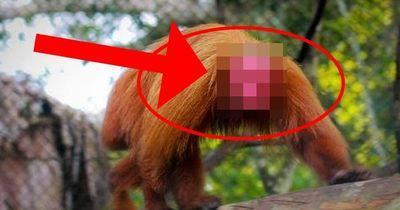 Diese Affen sehen total gruselig aus!