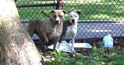 Diese Hunde wurden an einen Zaun gebunden ausgesetzt!