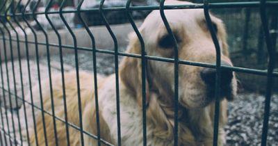 Er trat einen Straßenhund. Aber Rache ist bekanntlich süß!